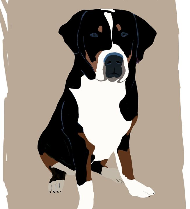 Greater Swiss Mountain Dog - KJHART