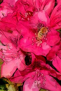 RHODODENDRON 8