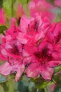 RHODODENDRON 10