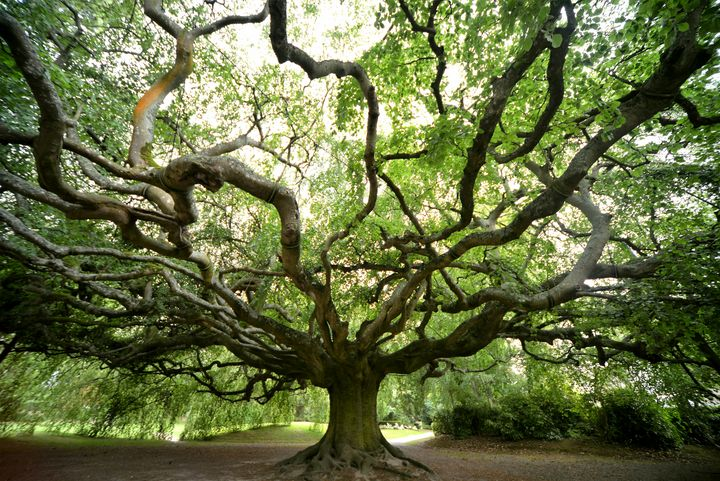 TENTACULAR TREE 1 - JEAN-JACQUES MASSOU