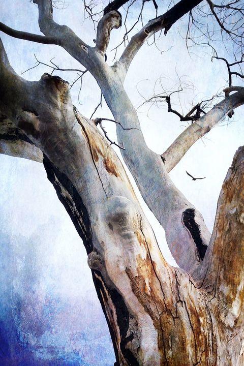 Lone Bird - The River's Daughter Digital Art