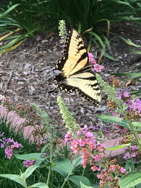Butterfly - Rhythm