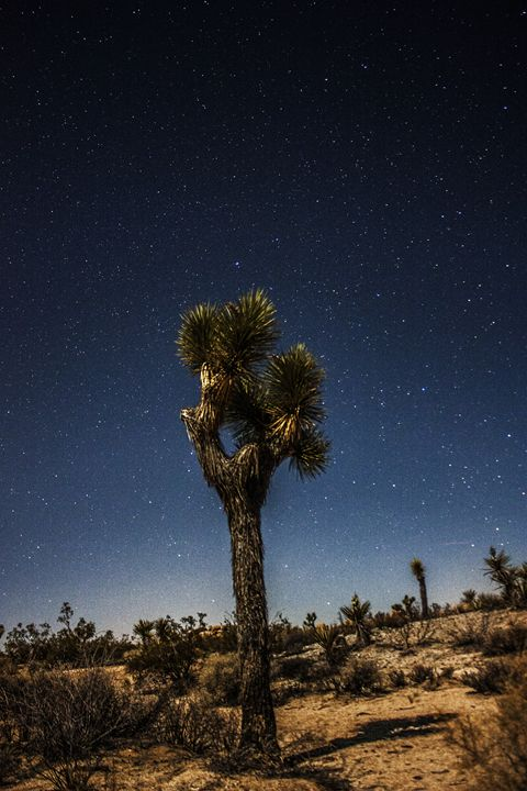 Night sky at the Joshua Tree NP - Coachella Valley Astronomy and Astrophotography