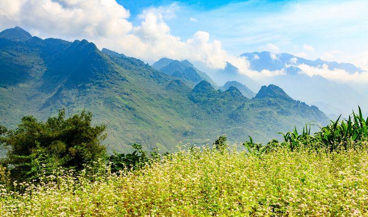 Tam Giac Mach Flowers Farm - Vietnam Landscape