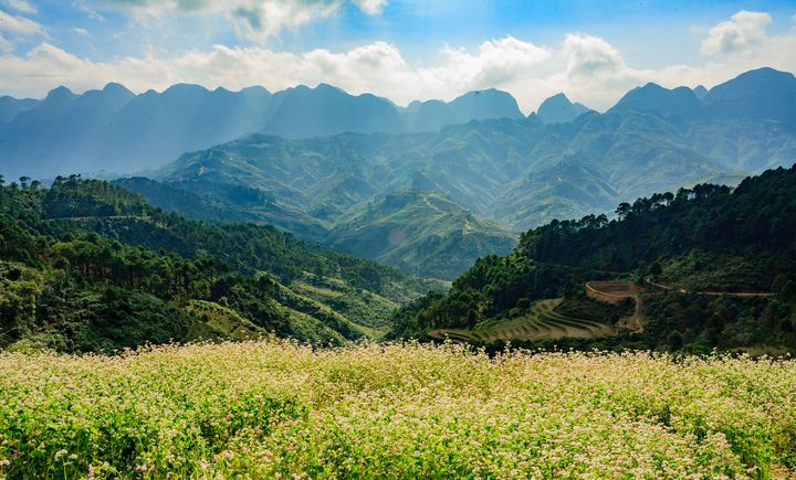 The flowers in Moutain - Vietnam Landscape