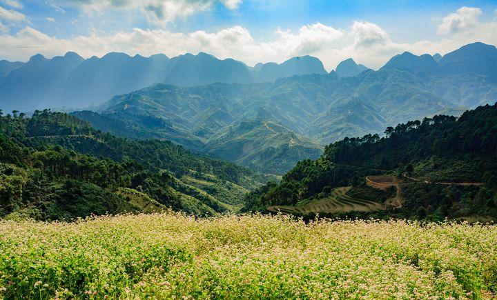 The flowers in Moutain - Vietnam Landscape