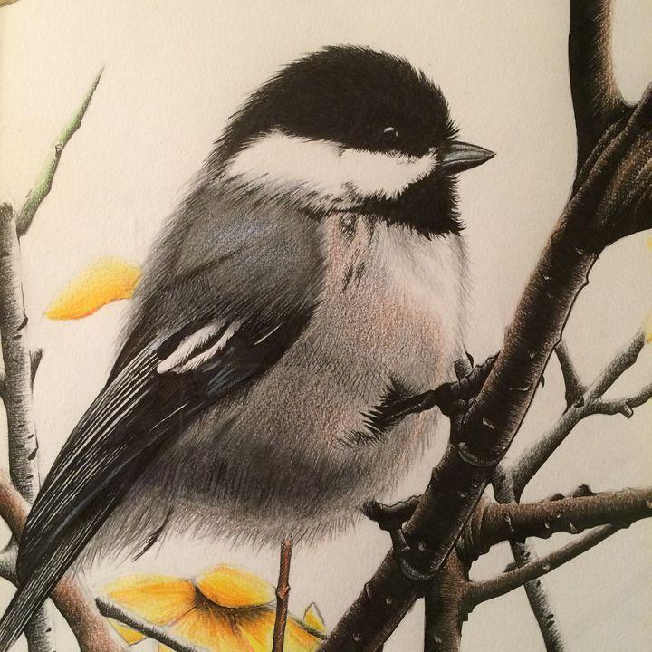Chickadee - JGeorgedraws