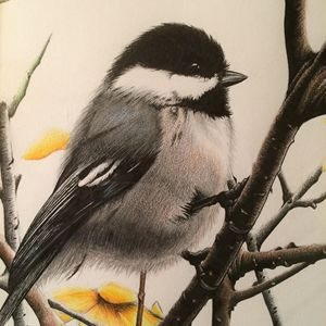 Chickadee - JGeorgedraws