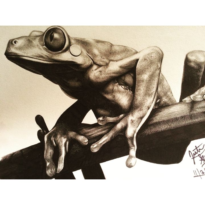 Red-eyed Tree Frog - JGeorgedraws