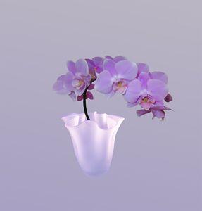 Orchids Elegant