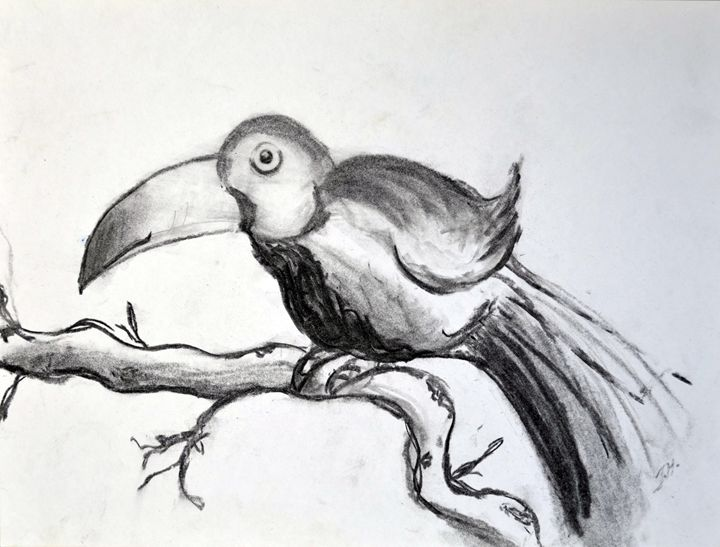 toucan - Art by Isabelle Hodge