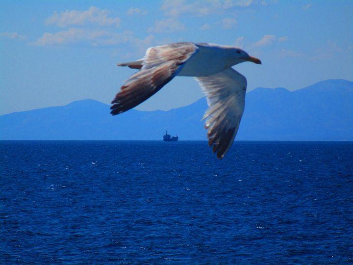 Sea gull - Athenslight