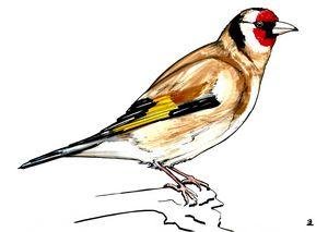 Goldfinch on a branch - Zebrito Art