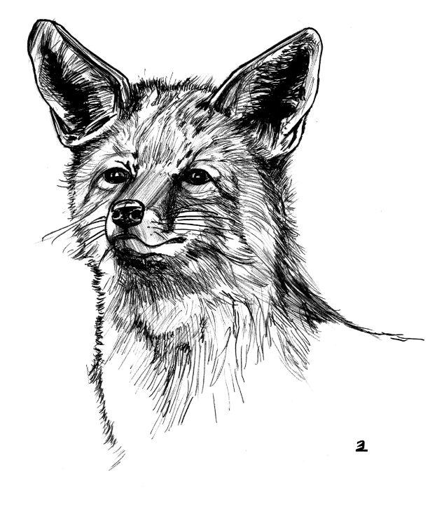 Fox - Zebrito Art