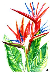 Bird of Paradise - Zebrito Art