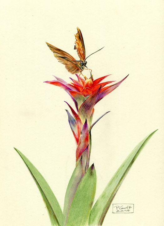 Guzmania 'Celine' - Pen's Pix
