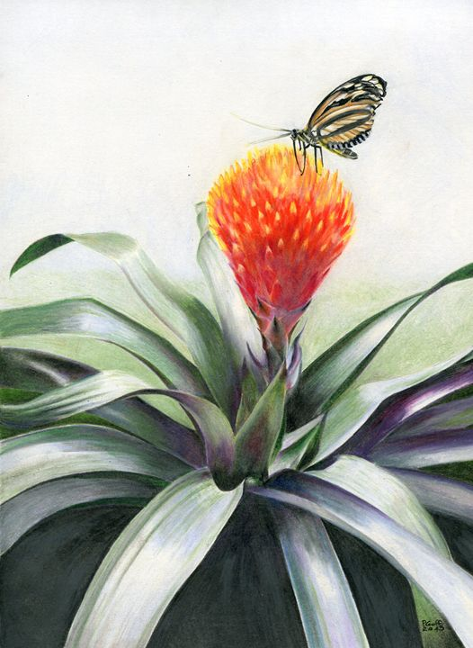 Butterfly Visits a Bromeliad - Pen's Pix