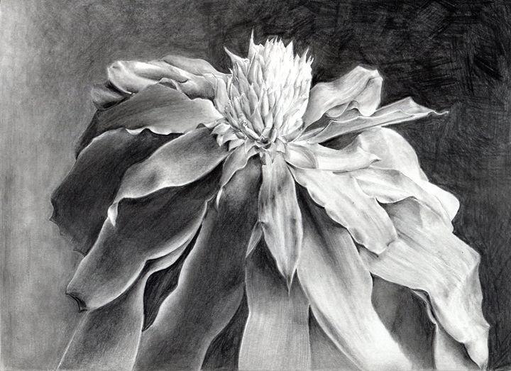 Picairnia tabuliformis - Pen's Pix