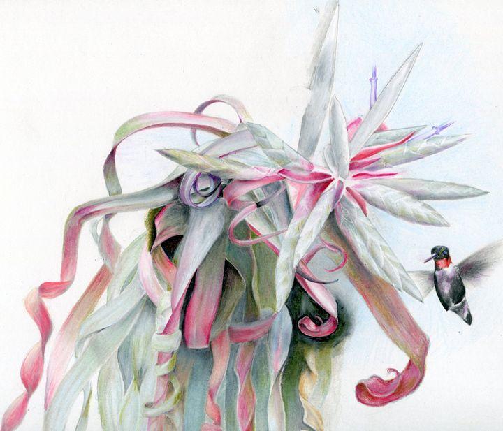 Hummingbird visits airplant - Pen's Pix