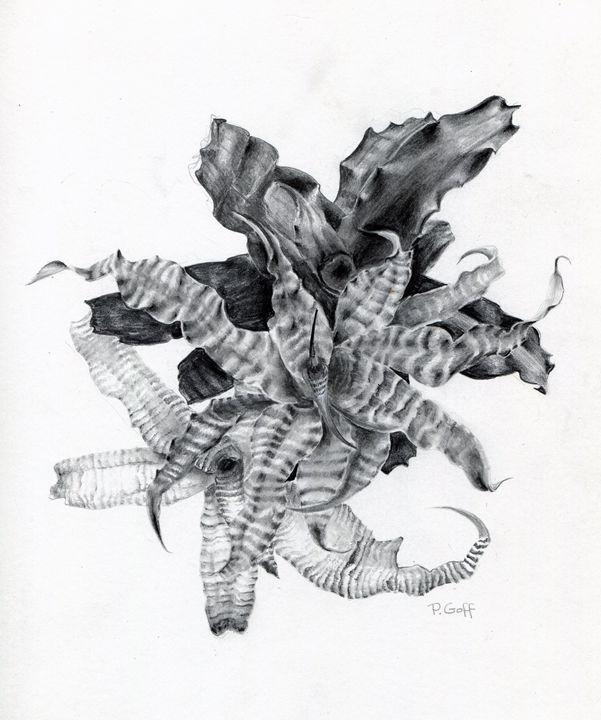 earth stars - Pen's Pix