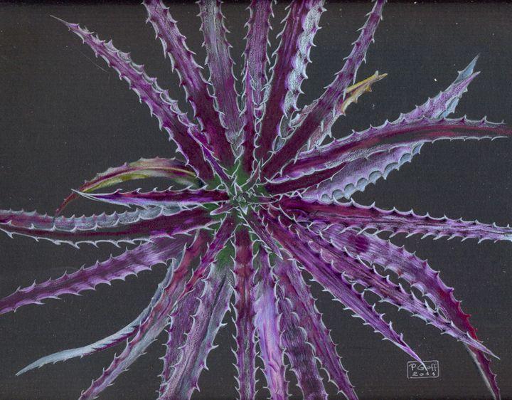Hechtia argentea - Pen's Pix