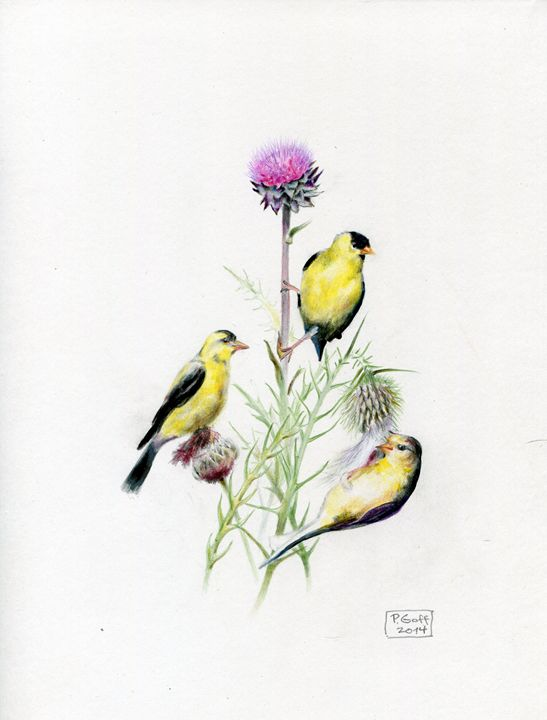 Goldfinches at Lunch - Pen's Pix