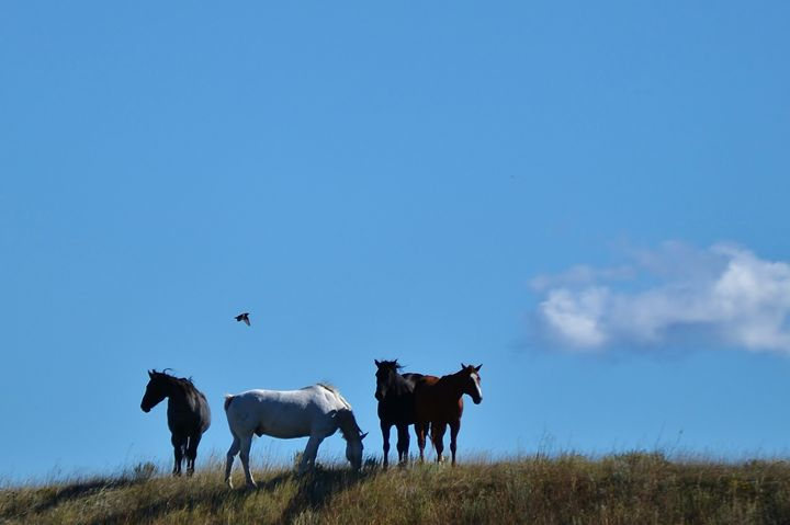 Four horses on a hill - 56th Street Photo