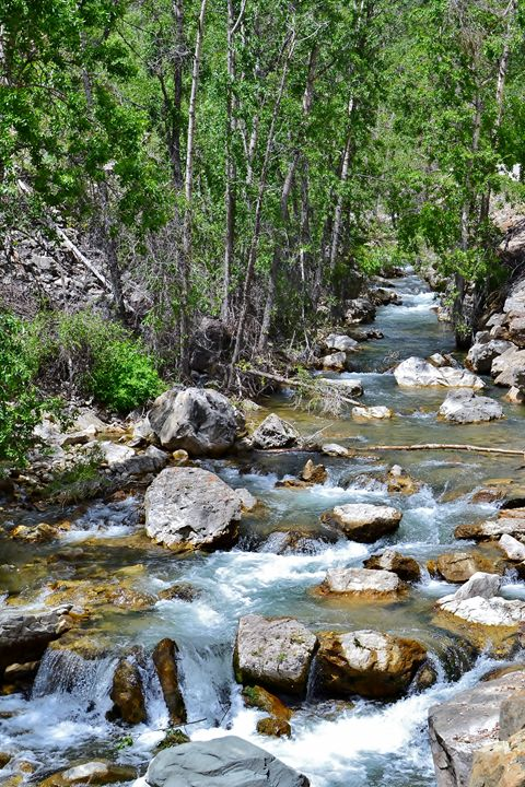 Spearfish Creek in the Black Hills - 56th Street Photo