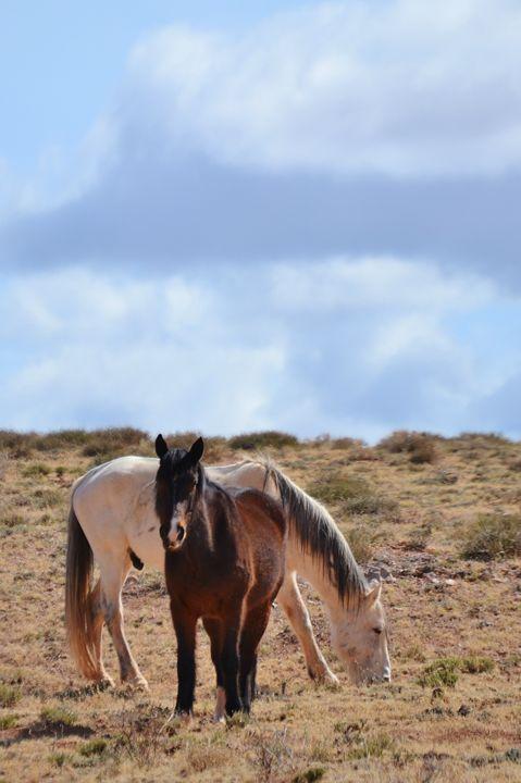 High desert ponies - 56th Street Photo