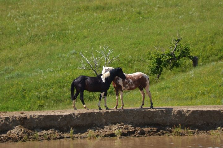 Horses at the stock pond - 56th Street Photo