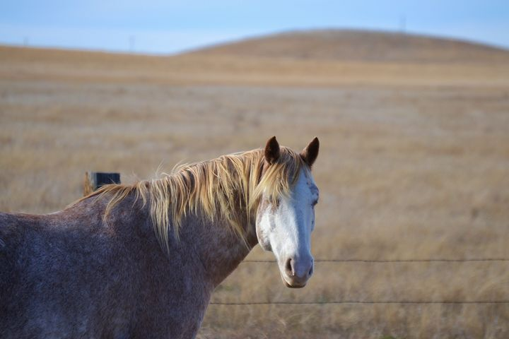 Horse in Field - 56th Street Photo