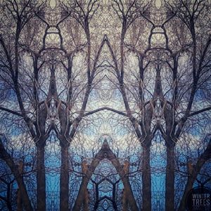 Cathedral of Winter Trees