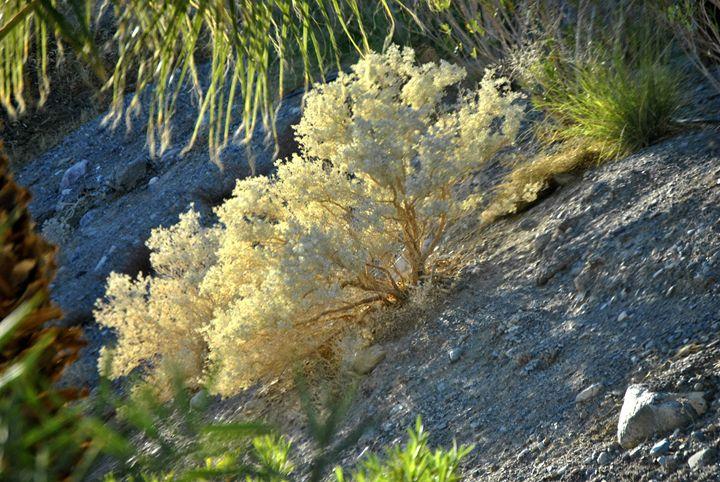 Desert Life - Mistyck Moon's Turmoil Of The Mind
