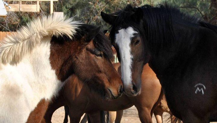 Horse and Pony - Mistyck Moon's Turmoil Of The Mind