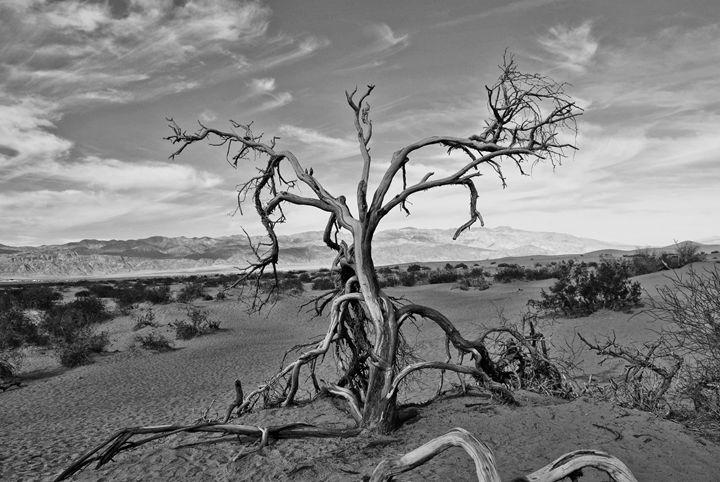 Dead Tree - Mistyck Moon's Turmoil Of The Mind