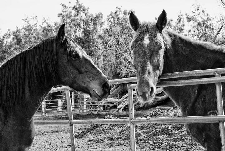 Desert Ranch Dwellers - Mistyck Moon's Turmoil Of The Mind