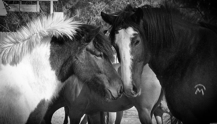 Horse and Pony - Mistyck Moon Creations Gallery