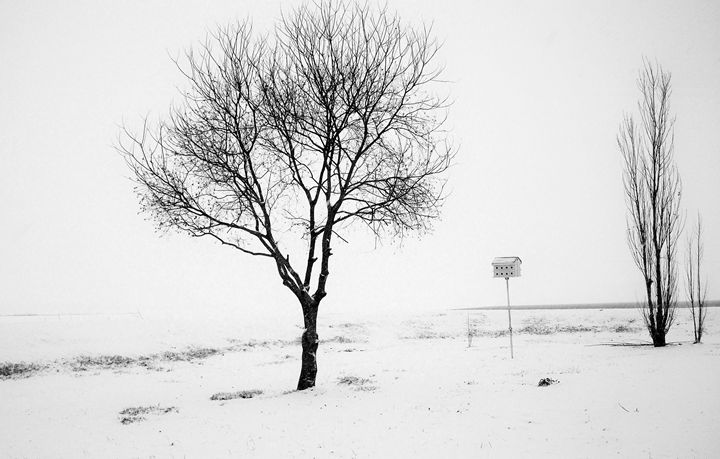 Lonely Winter - Mistyck Moon Creations Gallery