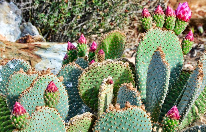 Flowering Cactus - Mistyck Moon Creations Gallery