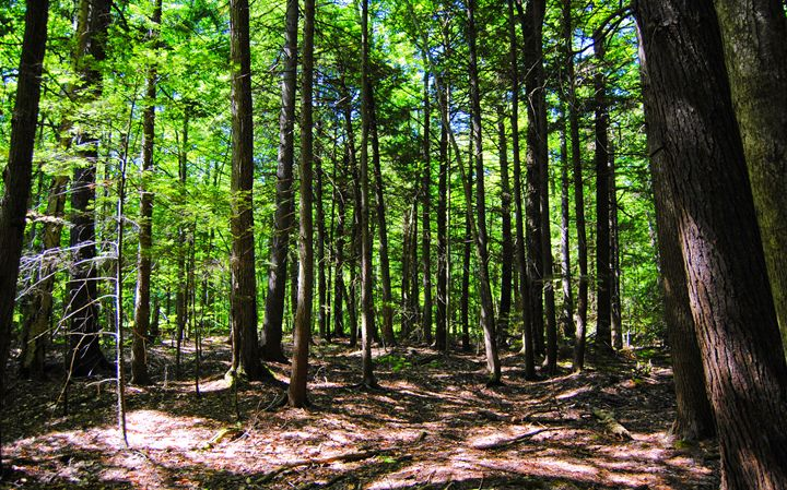 A Walk In The Woods - Mistyck Moon's Turmoil Of The Mind