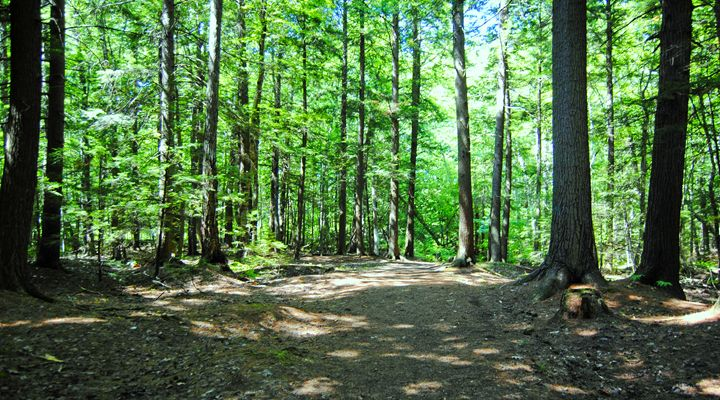 Walk In The Woods 2 - Mistyck Moon's Turmoil Of The Mind