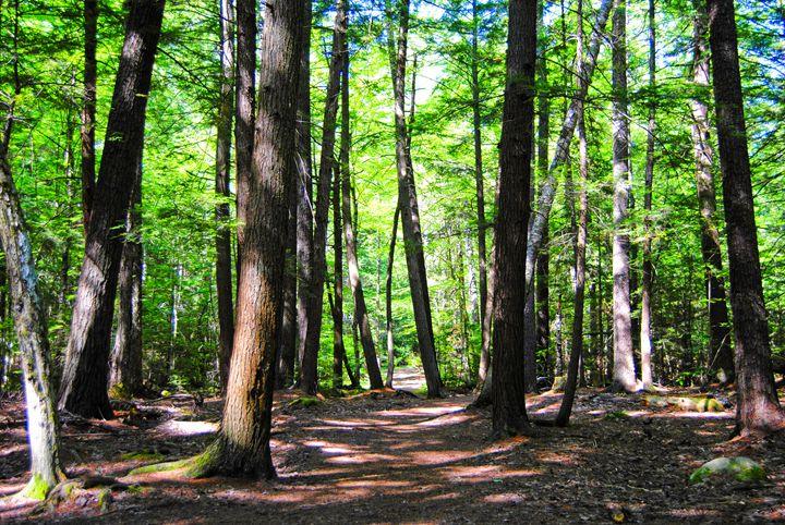 A Walk In The Woods 3 - Mistyck Moon's Turmoil Of The Mind