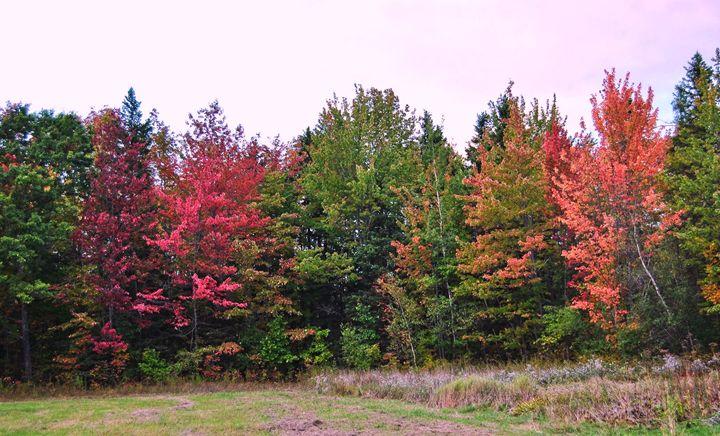 The Fall Season Begins - Mistyck Moon's Turmoil Of The Mind