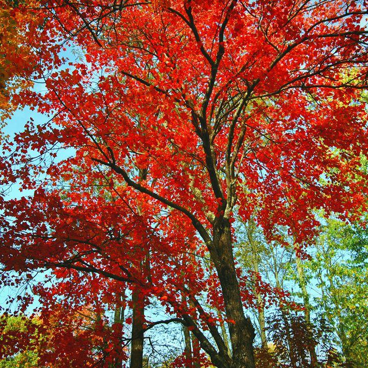 Bright Fall Tree - Mistyck Moon's Turmoil Of The Mind