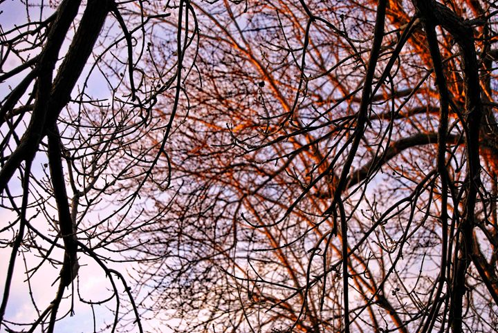 The Tangled Web Of Branches - Mistyck Moon Creations Gallery