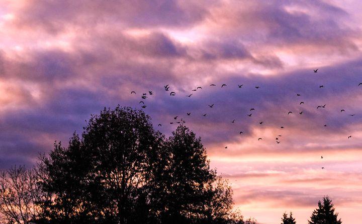 Sunrise Birds - Mistyck Moon's Turmoil Of The Mind
