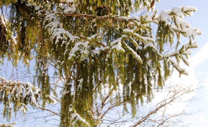 4 Winter In Bangor Maine 2017 - Mistyck Moon Creations Gallery