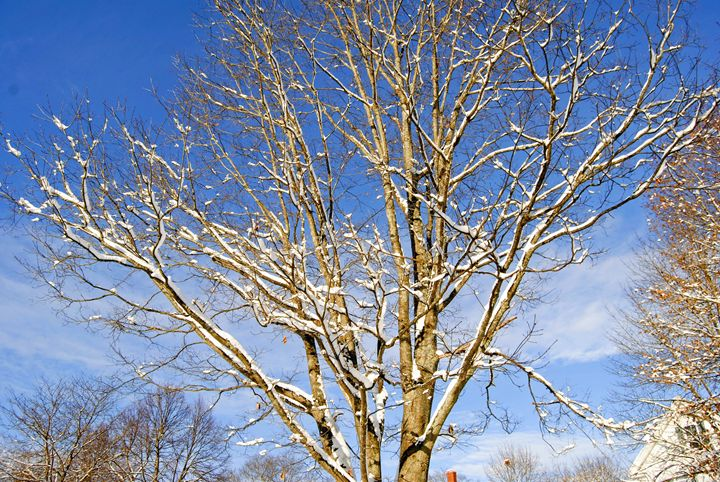 Winter Branches - Mistyck Moon Creations Gallery