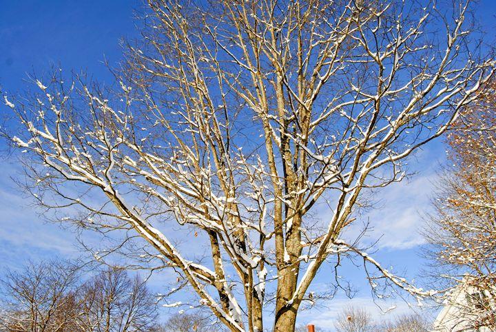 Winter Branches - Mistyck Moon's Turmoil Of The Mind