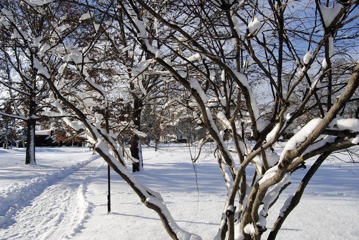 The Beauty Of Winter - Mistyck Moon's Turmoil Of The Mind